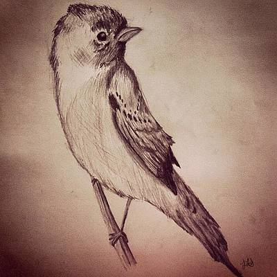 Jessica Sanders Drawing - Study Of A Bird by Jessica Sanders