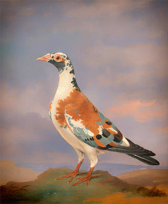Carrier Painting - Study Of A Carrier Pigeon by Mountain Dreams