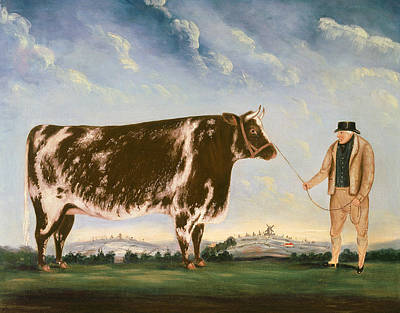 Reins Painting - Study Of A Shorthorn by William Joseph Shayer