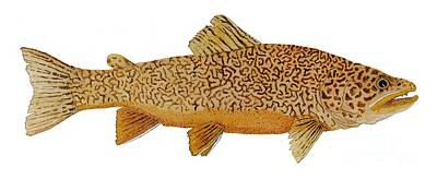 Study Of A Tiger Trout Print by Thom Glace
