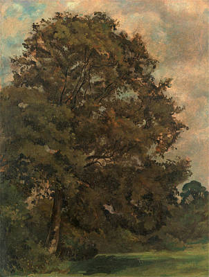 Color Field Drawing - Study Of An Ash Tree, Lionel Constable, 1828-1887 by Litz Collection