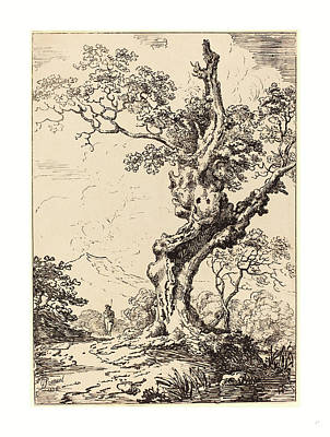 Study Of An Old Oak Tree, Water On Right Art Print By George Samuel,