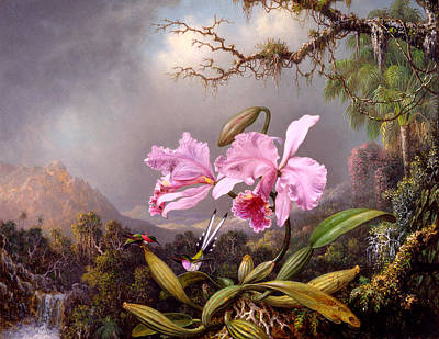Apple Blossom Painting - Study Of An Orchid by Martin Johnson Heade