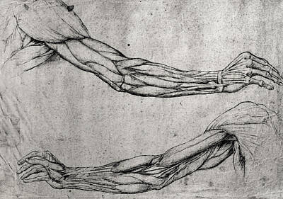 Pen Drawing - Study Of Arms by Leonardo Da Vinci