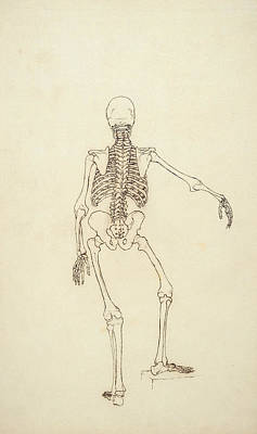 Proportion Photograph - Study Of The Human Figure, Posterior View, From A Comparative Anatomical Exposition by George Stubbs