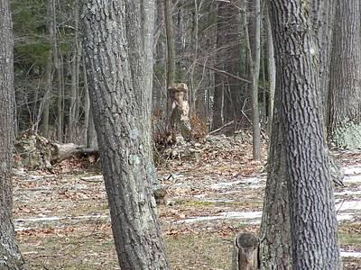 Photograph - Stump Lady by Lila Mattison