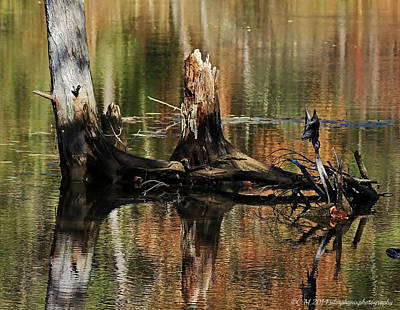 Vermeer Rights Managed Images - Stump Reflection Royalty-Free Image by Catherine Melvin