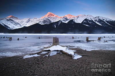 Stumps At Spray Lakes Art Print by Ginevre Smith