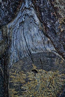 Photograph - Stumpy by Randal Bruck
