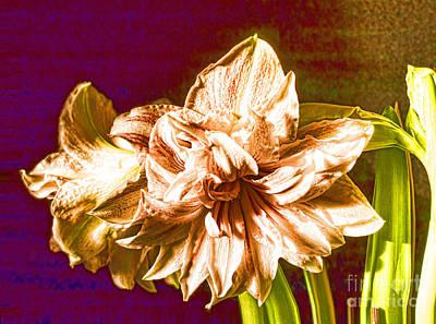 Photograph - Stunning Amaryllis by Brenda Kean