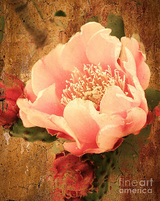 Prickly Rose Photograph - Stunning Pink Prickly Pear by Beverly Guilliams