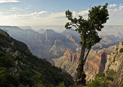 Photograph - Stunted Pine North Rim Grand Canyon  by Gary Eason