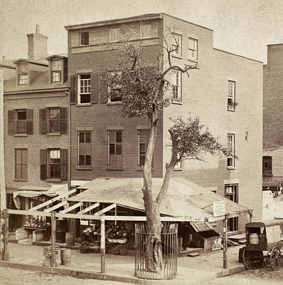 1880s Photograph - Stuyvesant's Pear Tree by Granger