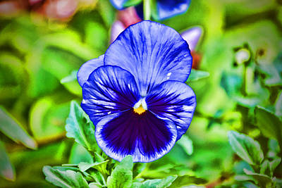 Photograph - Stylized Blue Pansy by Jeanne May