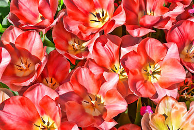 Photograph - Stylized Tulips  by Jeanne May