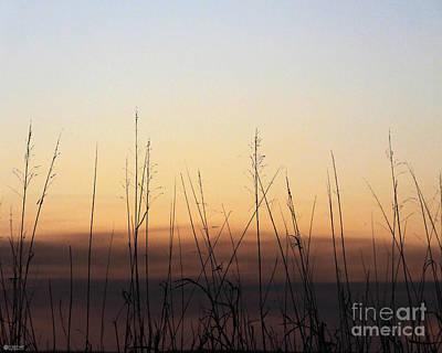 Photograph - Subdued Sunst Lacassine Nwr by Lizi Beard-Ward