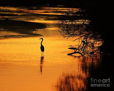Photograph - Sublime Silhouette by Al Powell Photography USA