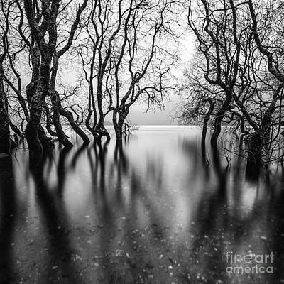 Submerging Trees Art Print by John Farnan