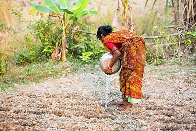 Clothes Clothing Photograph - Subsistence Farmer Watering Vegetables by Ashley Cooper