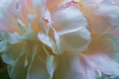 Photograph - Subtle Beauty by Liz Evensen