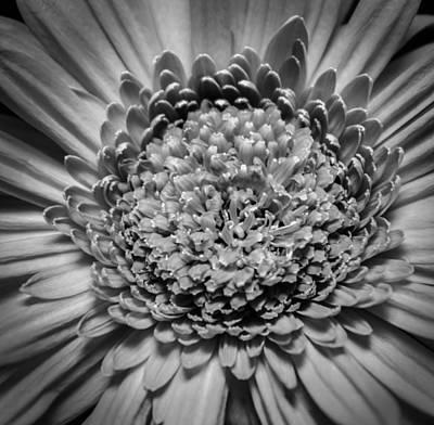 Photograph - Subtle Complexity In Black And White by Eva Kondzialkiewicz