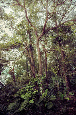 Photograph - Subtropical Forest by Alexander Kunz