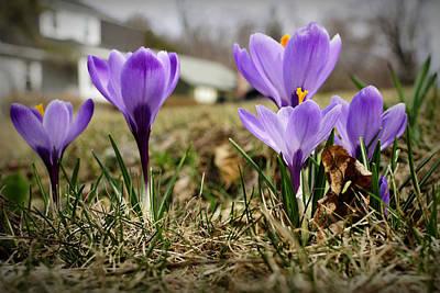 Photograph - Suburban Spring by Luke Moore