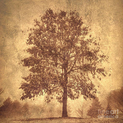 Photograph - Suburban Tree by Chris Scroggins