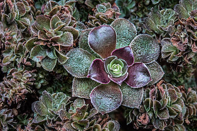 Photograph - Succulent Art by Dale Kincaid