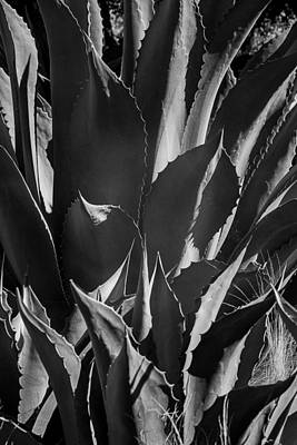 Succulent Black And White Art Print by Garry Gay