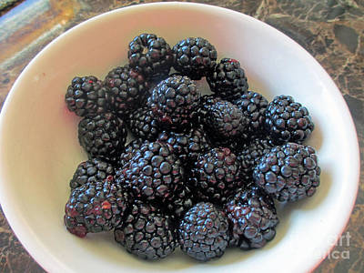 Photograph - Succulent Blackberries  by Kay Novy