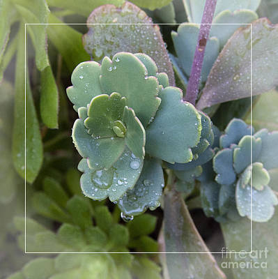 Photograph - Succulent Blue Green Flower Leaflet With Water Drops by Jerry Cowart