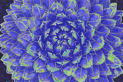 Succulent - Blue Art Print by Jane Schnetlage