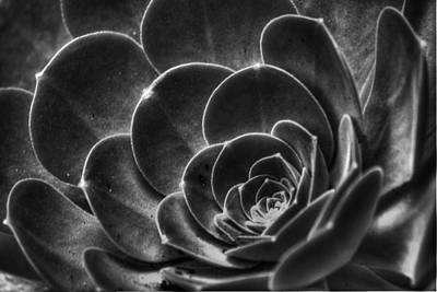 Photograph - Succulent Bw by Morgan Wright