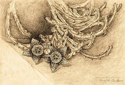 Succulent Flowers Art Print