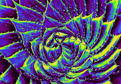Digital Art - Succulent Geometry by Jane Schnetlage