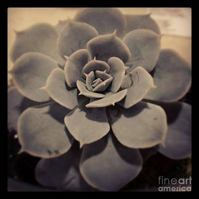 Succulent Art Print by Heather L Wright