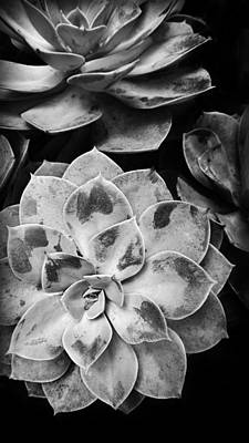 Photograph - Succulent In Black And White  by Kelly Hazel
