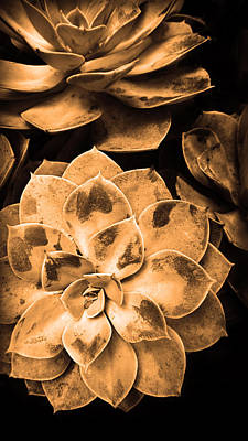 Photograph - Succulent In Warm Tones by Kelly Hazel