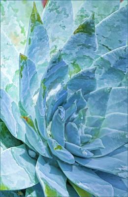 Painting - Succulent Swirl by Douglas MooreZart