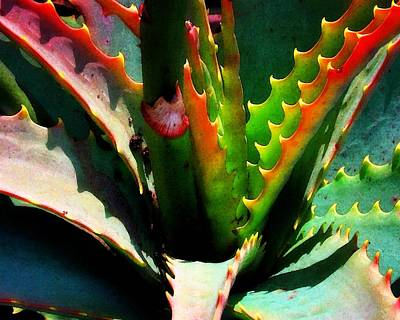 Photograph - Succulent by Timothy Bulone