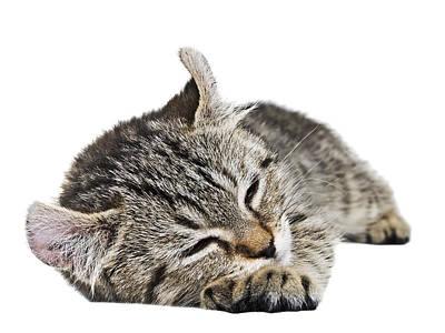 Gray Tabby Photograph - Such A Sleepy Kitten by Susan Leggett