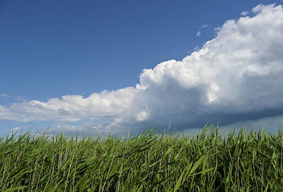 Photograph - Suffolk Skies by Jenny Setchell