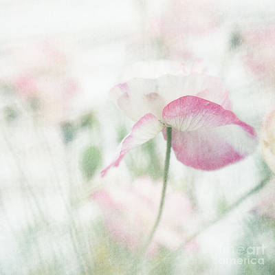 Pink Poppy Blossom Macro Photograph - suffused with light I by Priska Wettstein