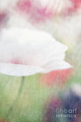 Pink Poppy Blossom Macro Photograph - suffused with light VI by Priska Wettstein