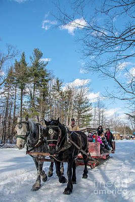 Photograph - Sugar Bush Horse Ride by Cheryl Baxter