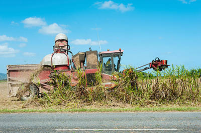 Machinery Photograph - Sugar Cane Being Harvested, Lower by Panoramic Images