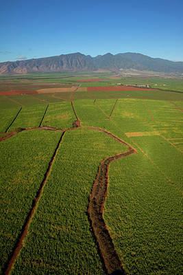 Sugar Cane Field, Maui, Hawaii Art Print