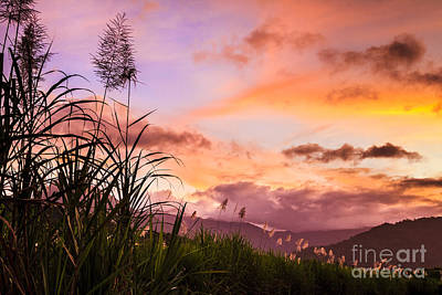 Photograph - Sugar Cane In Far North Queensland by Silken Photography