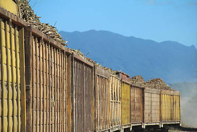 Photograph - Sugar Cane Train by Debbie Cundy